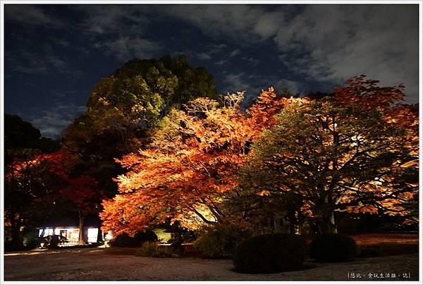 六義園-夜楓-7.JPG