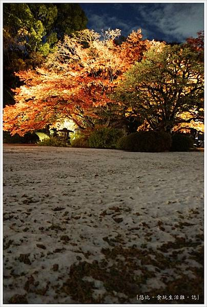 六義園-夜楓-9.JPG