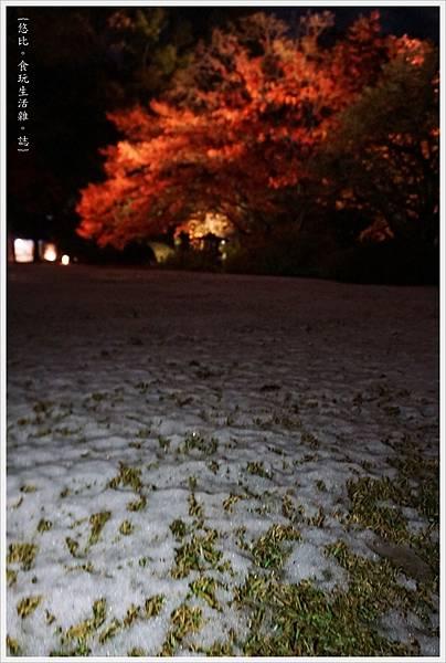 六義園-夜楓-10.JPG