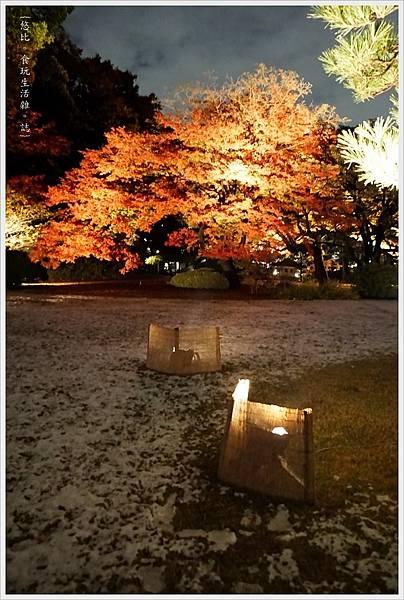 六義園-夜楓-12.JPG