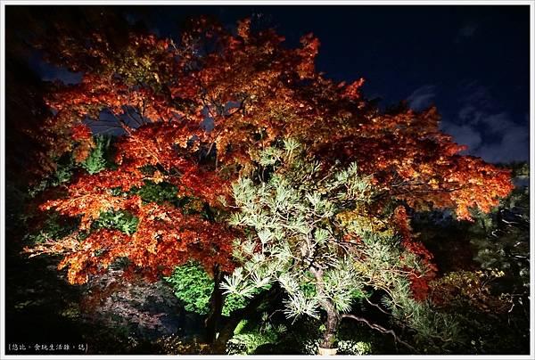 六義園-夜楓-28.JPG
