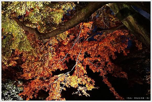 六義園-夜楓-30.JPG