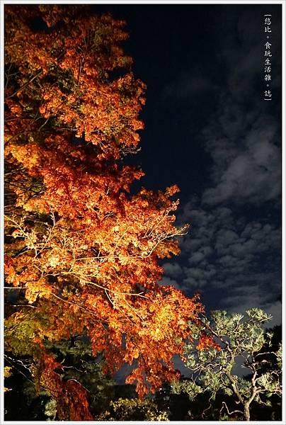 六義園-夜楓-31.JPG