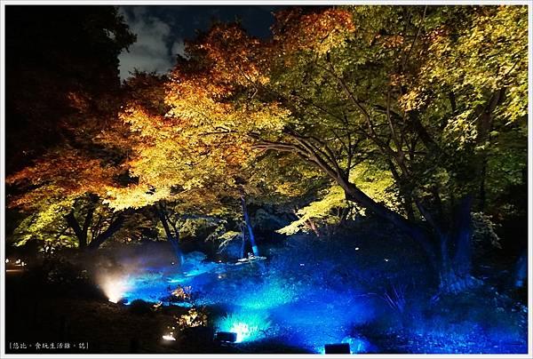 六義園-夜楓-33.JPG