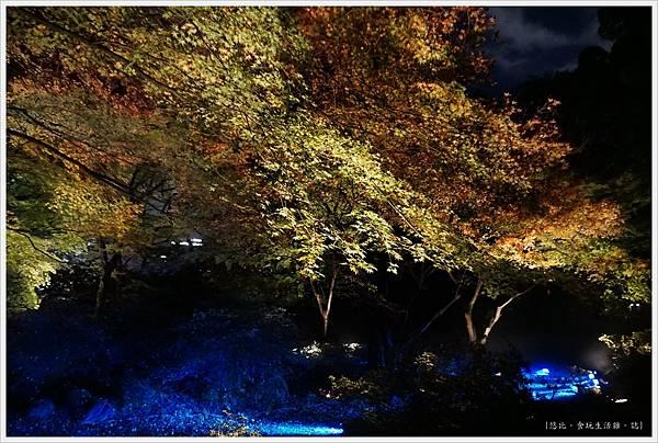 六義園-夜楓-34.JPG