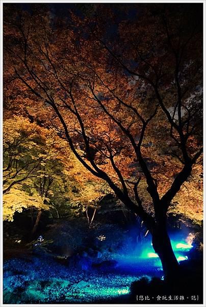 六義園-夜楓-36.JPG