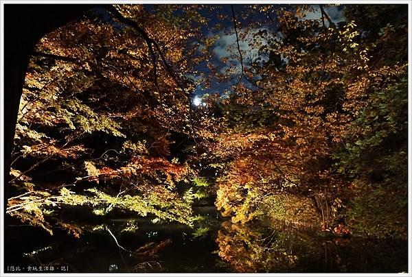 六義園-夜楓-42.JPG