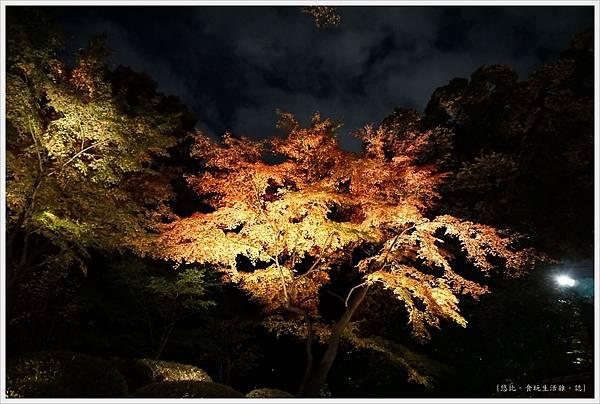 六義園-夜楓-43.JPG