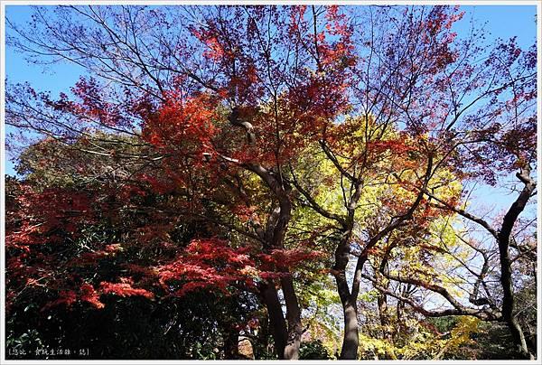 代代木公園-6.JPG