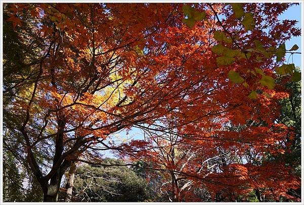 代代木公園-16.JPG