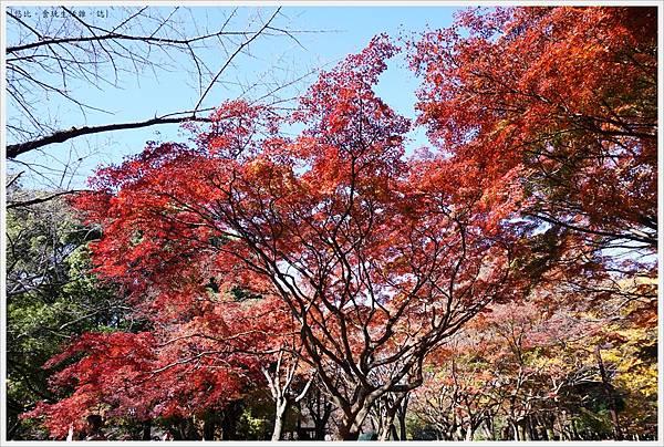 代代木公園-26.JPG