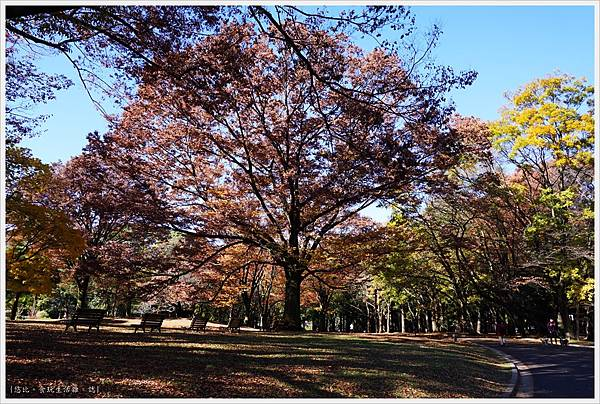 代代木公園-30.JPG