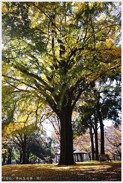 代代木公園-31.JPG