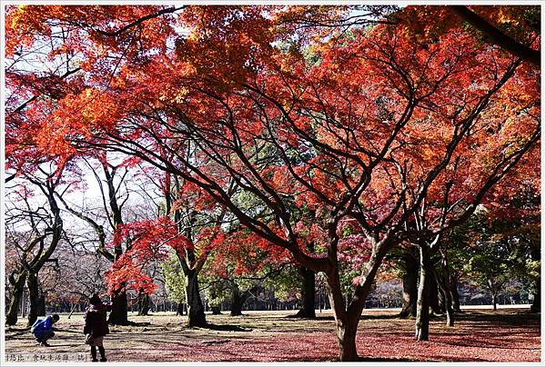 代代木公園-32.JPG