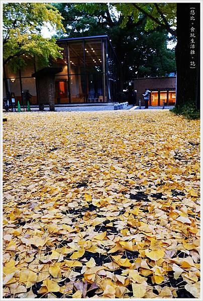 東大-22-銀杏.JPG