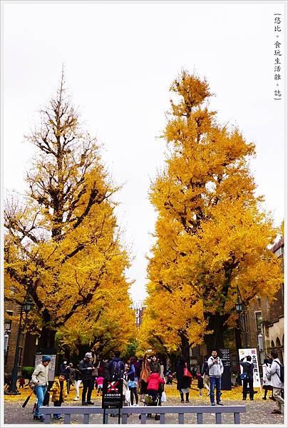 東大-30-銀杏.JPG
