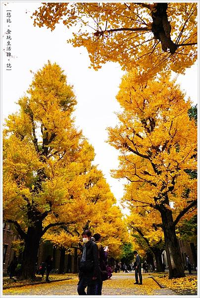 東大-36-銀杏.JPG