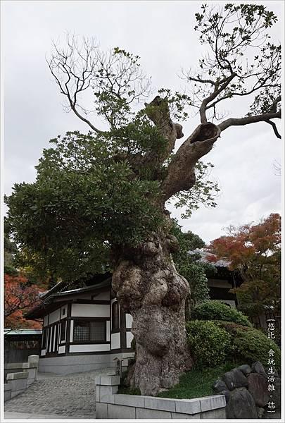 鎌倉-142-長谷寺.JPG
