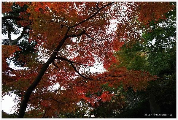 鎌倉-170-長谷寺.JPG