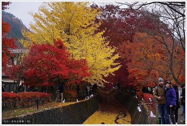 紅葉迴廊-紅葉祭-白天-31.JPG