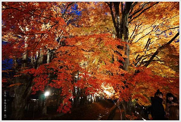 紅葉迴廊-紅葉祭-夜楓-11.JPG