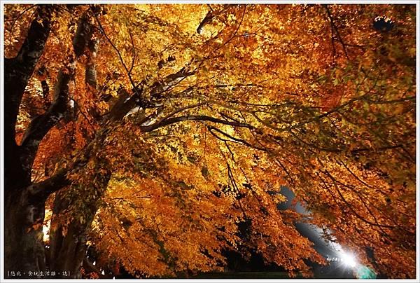 紅葉迴廊-紅葉祭-夜楓-16.JPG