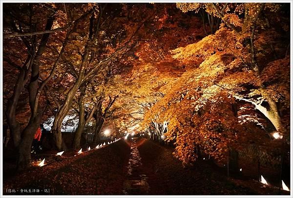 紅葉迴廊-紅葉祭-夜楓-32.JPG