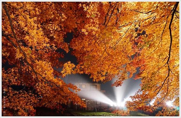 紅葉迴廊-紅葉祭-夜楓-25.JPG