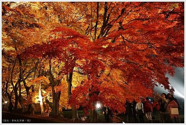 紅葉迴廊-紅葉祭-夜楓-44.JPG