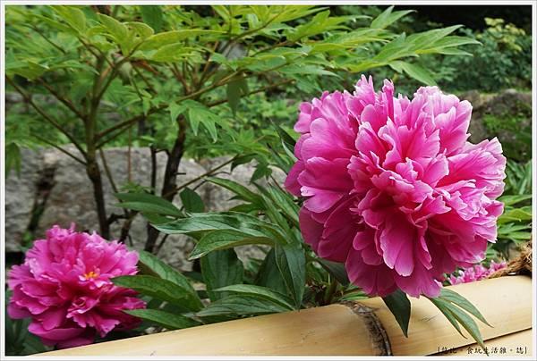 奈良長谷寺-180-牡丹