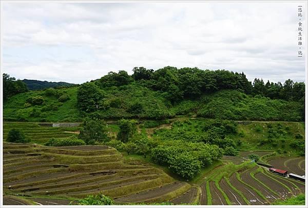 富田林-17-千早赤阪村梯田.JPG