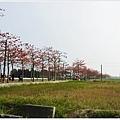 林初埤木棉花道-60.JPG