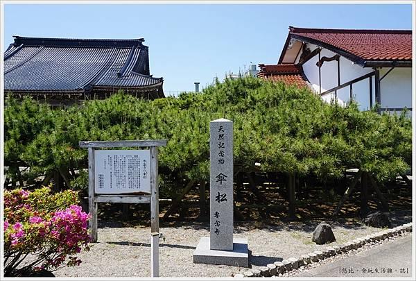 富山-新湊-30-專念寺傘松.JPG