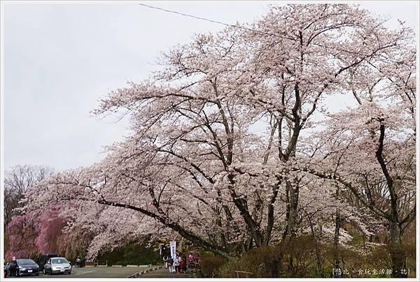 船岡-22-船岡城跡公園.JPG