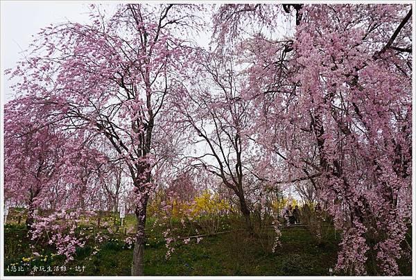 船岡城跡公園-91.JPG