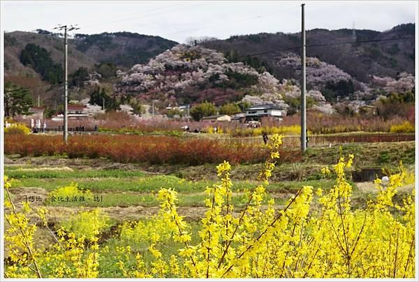 花見山-2.JPG
