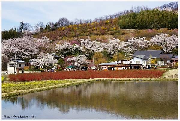 花見山-4.JPG