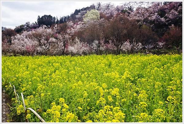 花見山-12.JPG