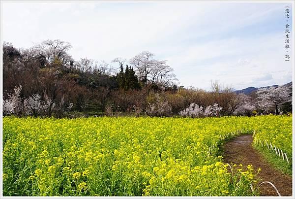 花見山-14.JPG