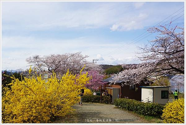 花見山-18.JPG