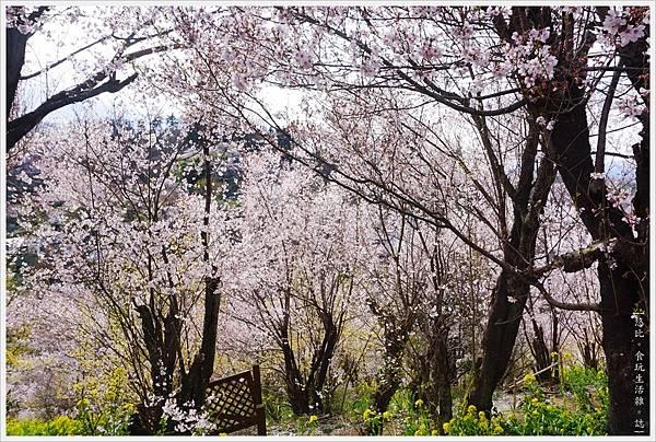 花見山-31.JPG