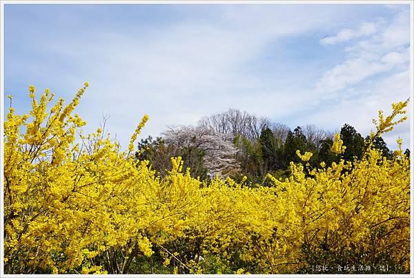 花見山-34.JPG