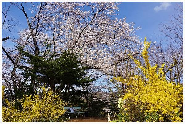花見山-36.JPG