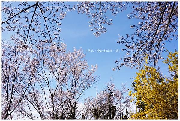 花見山-50.JPG