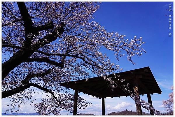 花見山-57.JPG