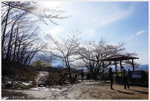 花見山-64.JPG