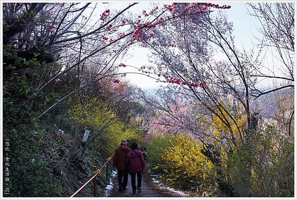 花見山-79.JPG