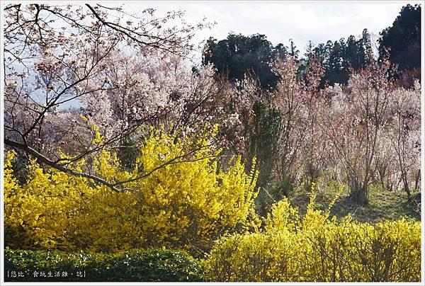 花見山-102.JPG