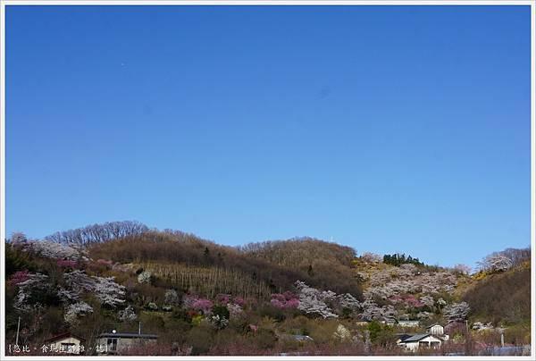 花見山-111.JPG