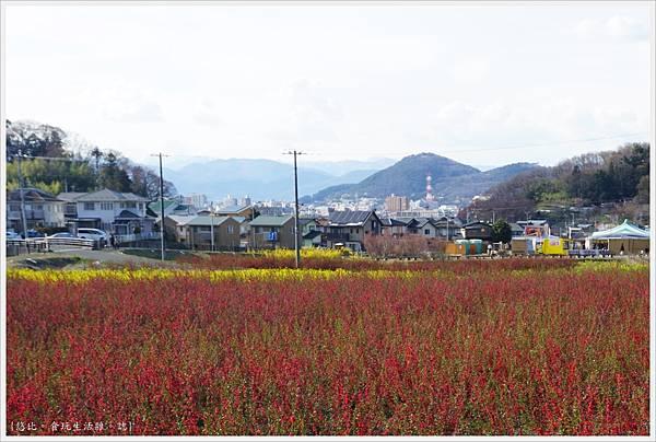 花見山-112.JPG
